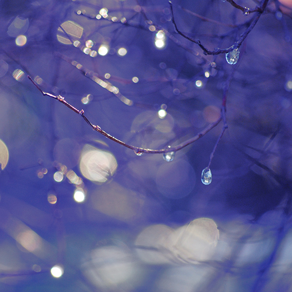 iPapers.co-Apple-iPhone-iPad-Macbook-iMac-wallpaper-bf49-bokeh-rain-tree-art-blue-wallpaper