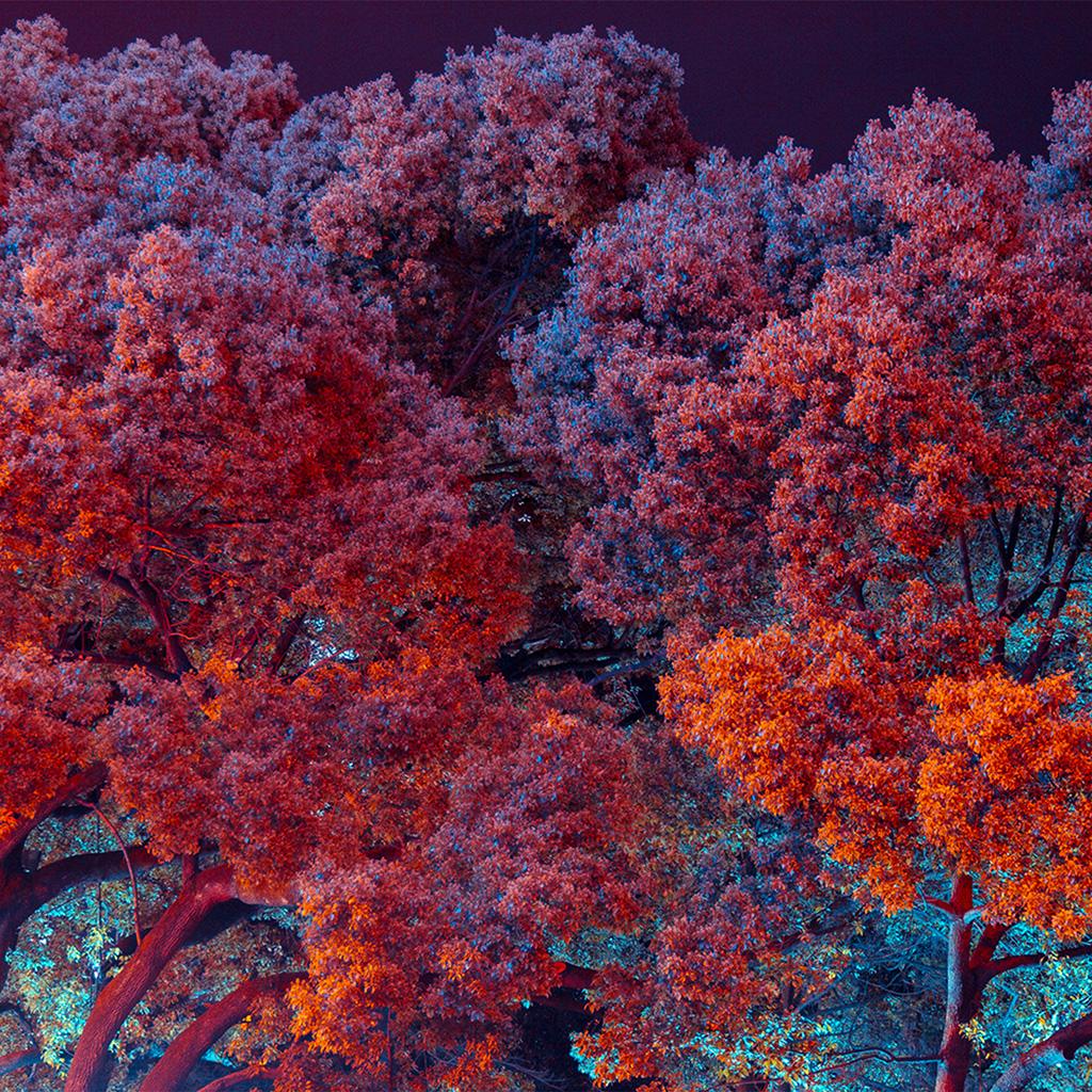 wallpaper-bf97-tree-red-nature-art-wallpaper