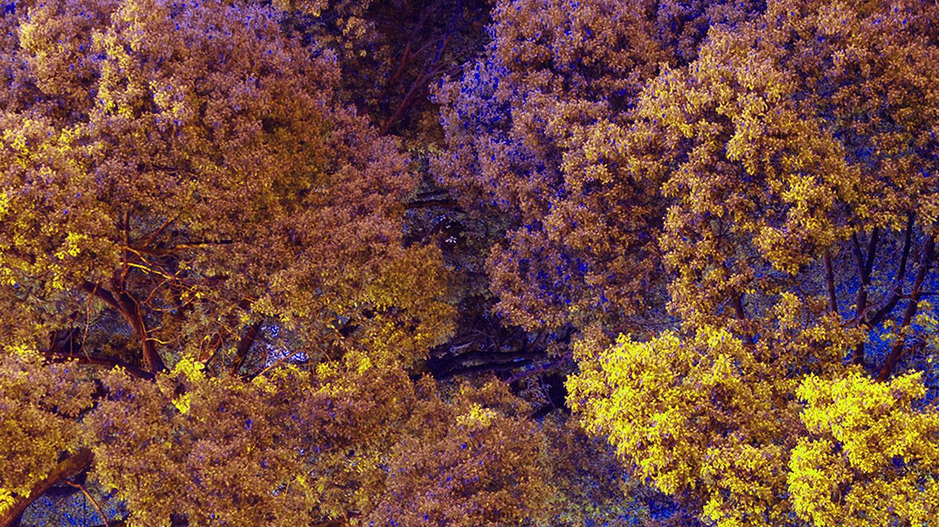 desktop-wallpaper-laptop-mac-macbook-air-bf98-tree-nature-art-purple-wallpaper