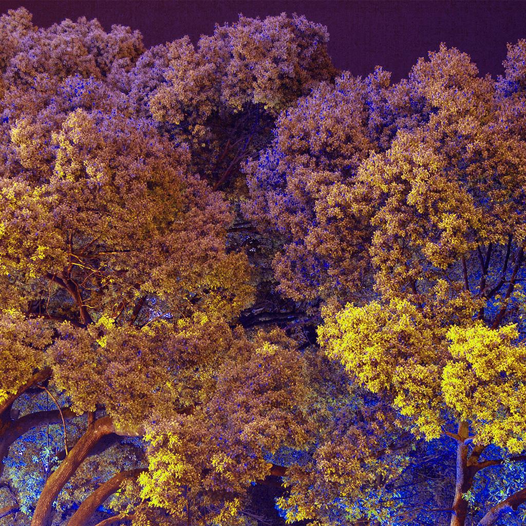 wallpaper-bf98-tree-nature-art-purple-wallpaper