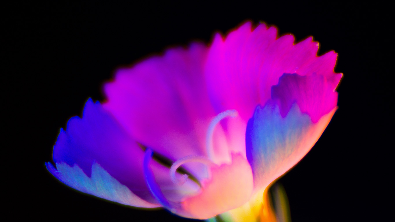 desktop-wallpaper-laptop-mac-macbook-air-bg11-flower-dark-neon-color-art-wallpaper