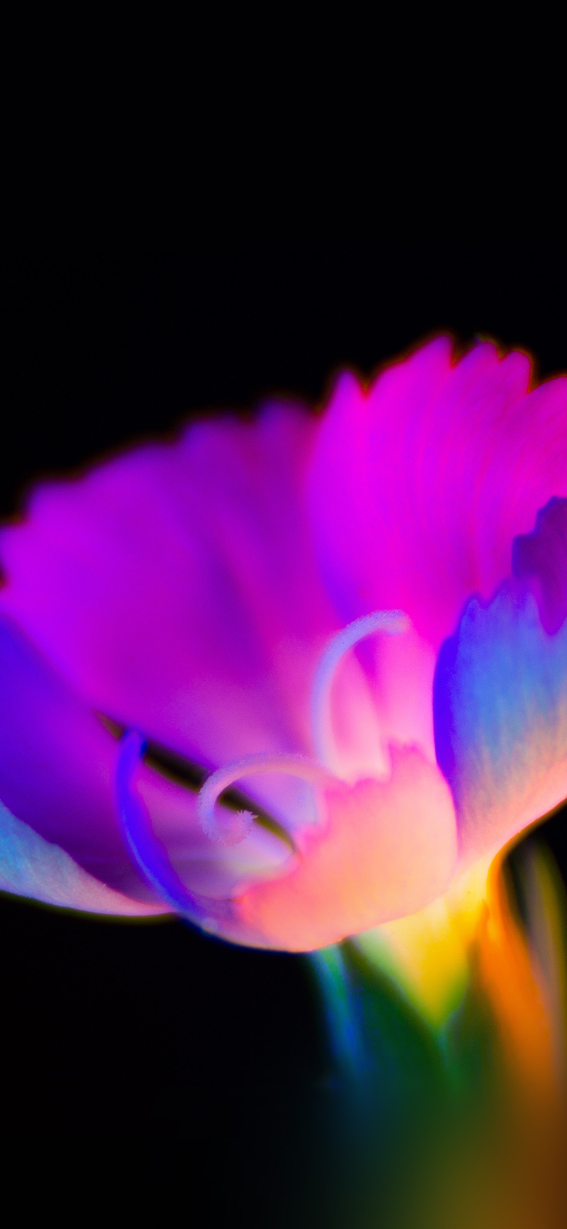 iPhonexpapers.com-Apple-iPhone-wallpaper-bg11-flower-dark-neon-color-art
