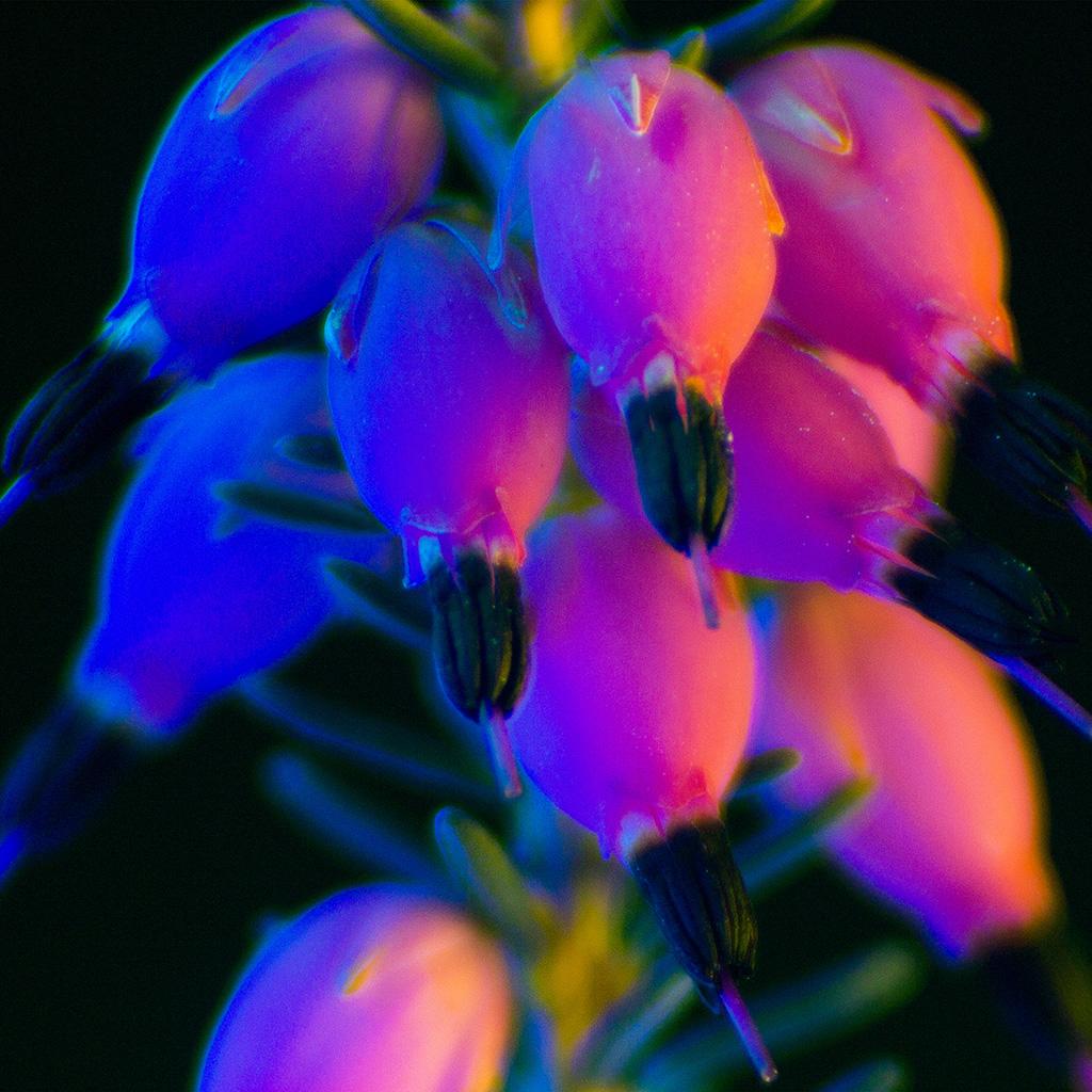 wallpaper-bg19-flower-neon-rainbow-art-dark-wallpaper