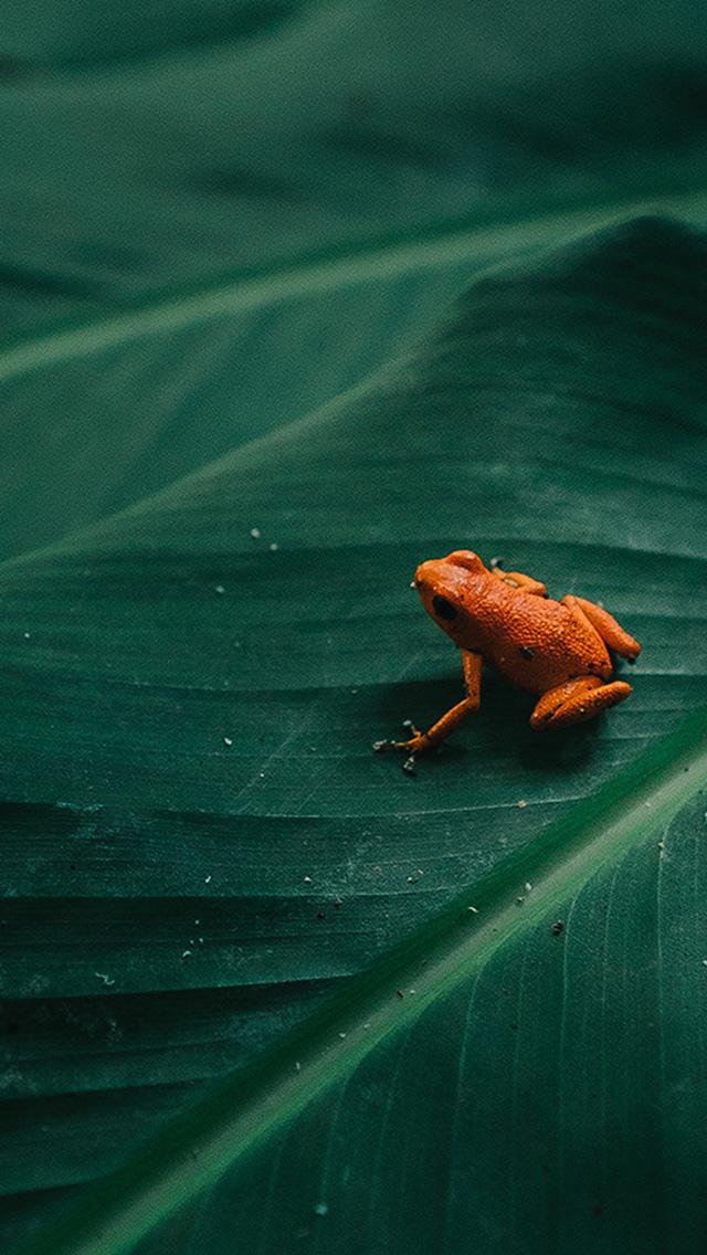 freeios8.com-iphone-4-5-6-plus-ipad-ios8-bi16-frog-leaf-orange-nature-art