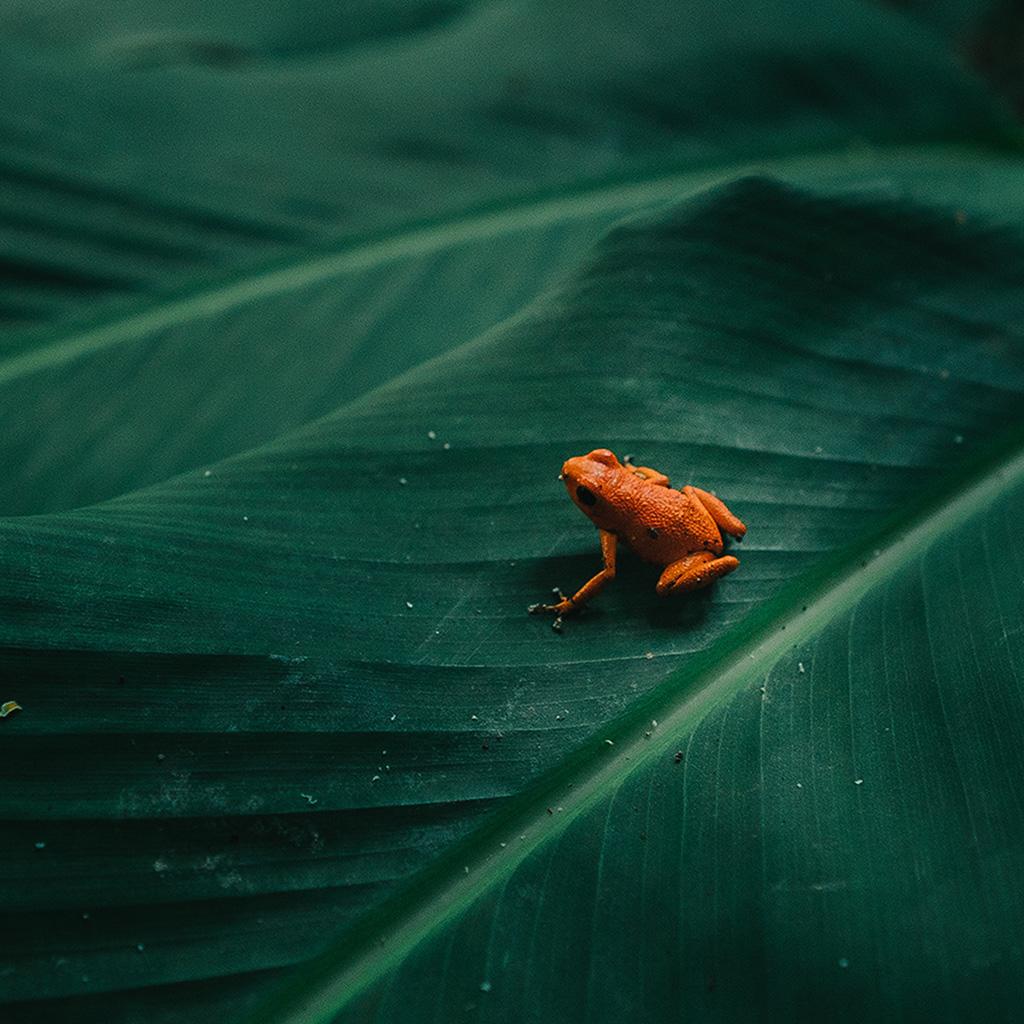 wallpaper-bi16-frog-leaf-orange-nature-art-wallpaper
