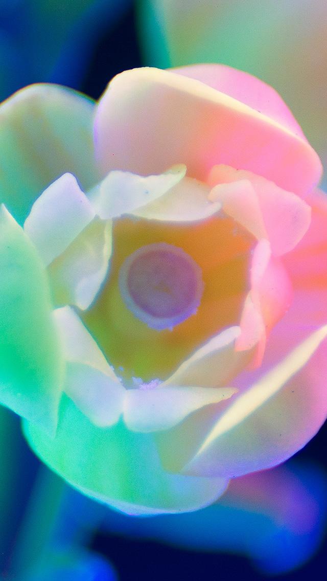 freeios8.com-iphone-4-5-6-plus-ipad-ios8-bj23-neon-flower-night-color-art