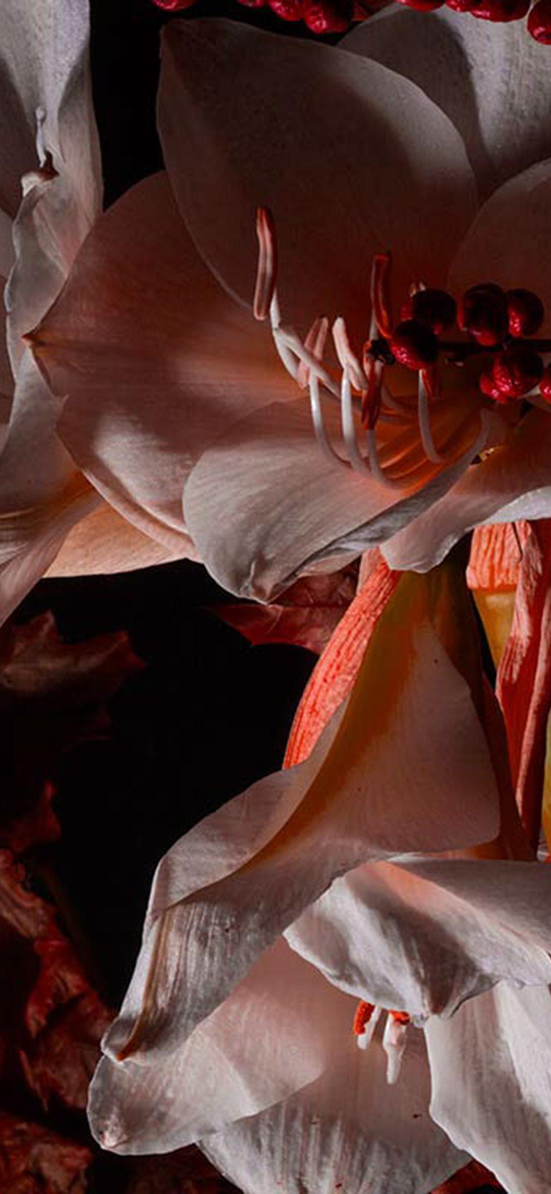 iPhonexpapers.com-Apple-iPhone-wallpaper-bj80-art-flower-dark