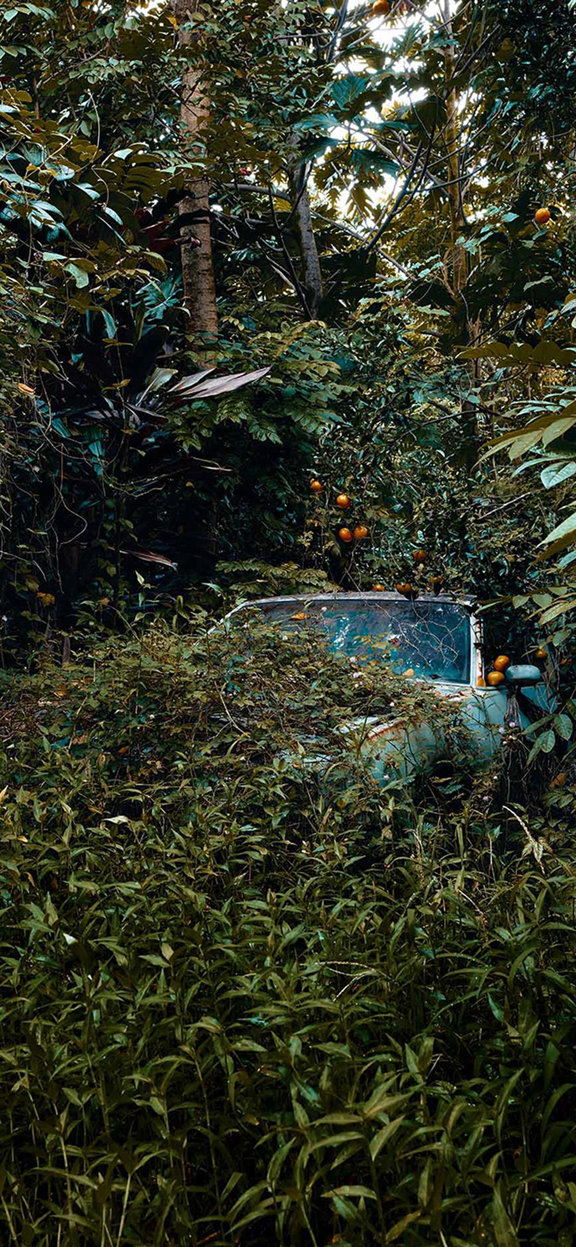 iPhonexpapers.com-Apple-iPhone-wallpaper-bk26-art-forest-car-nature
