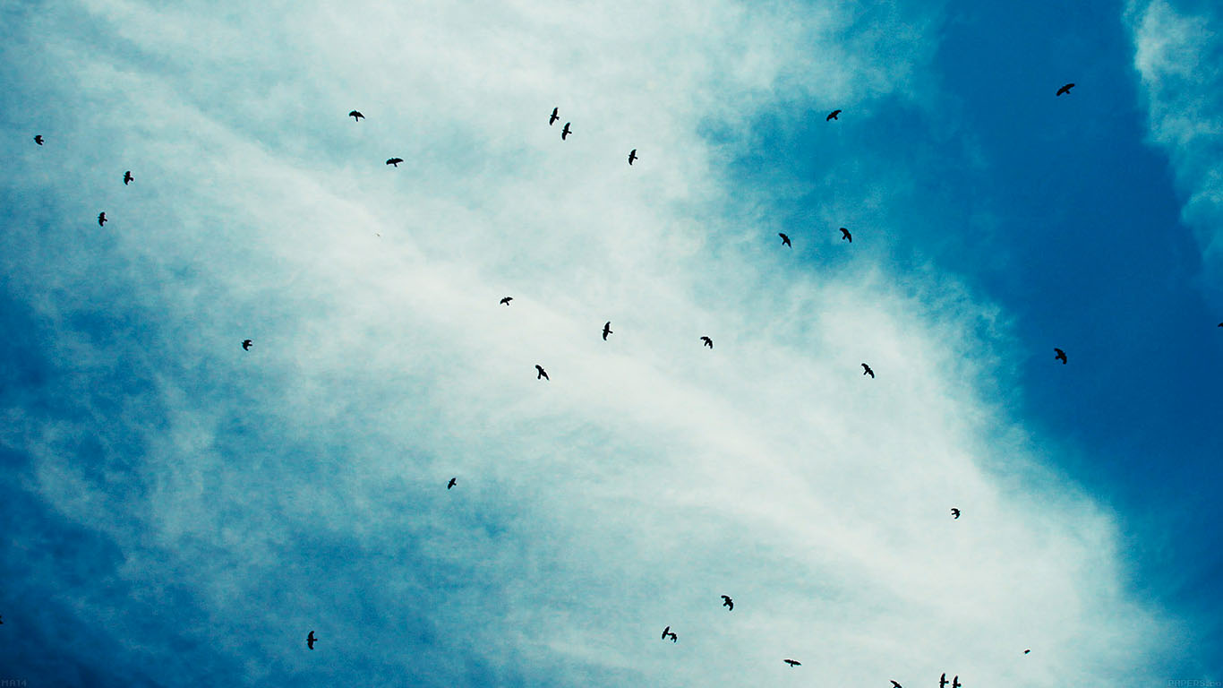 iPapers.co-Apple-iPhone-iPad-Macbook-iMac-wallpaper-ma14-blue-birds-sky-animal-nature