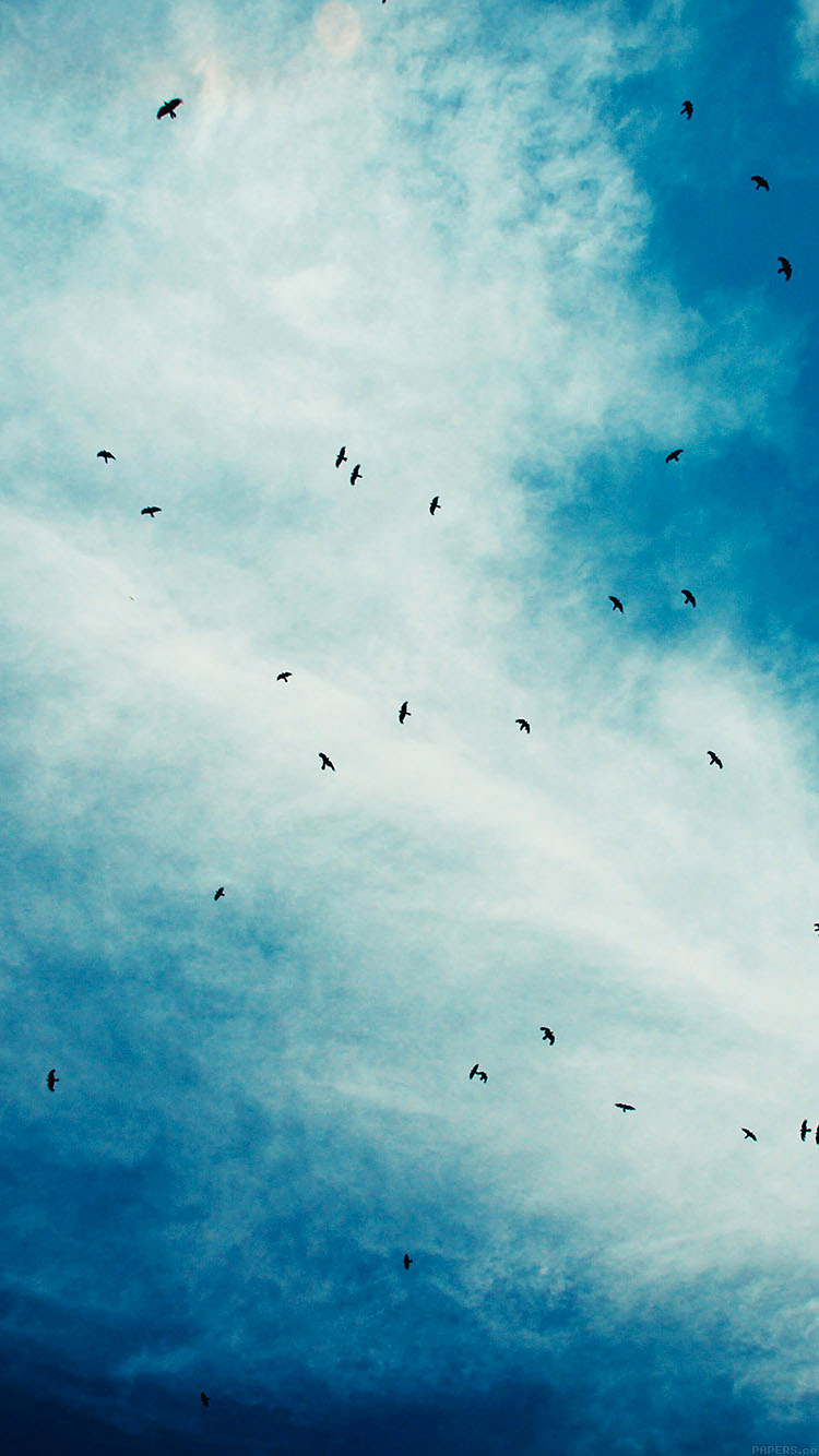 iPhone6papers.co-Apple-iPhone-6-iphone6-plus-wallpaper-ma14-blue-birds-sky-animal-nature