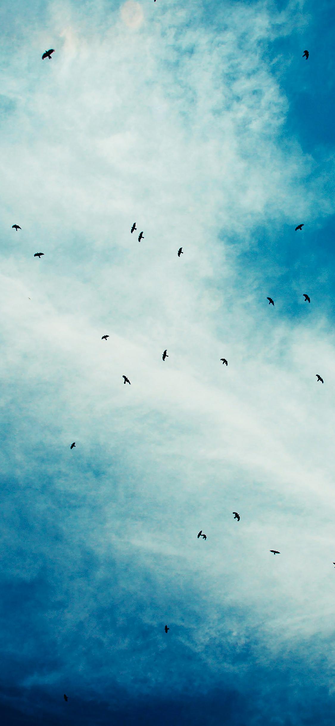 iPhoneXpapers.com-Apple-iPhone-wallpaper-ma14-blue-birds-sky-animal-nature