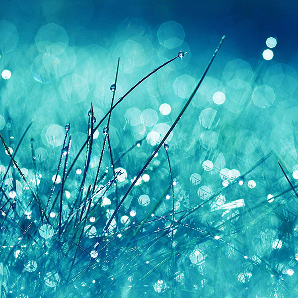 iPapers.co-Apple-iPhone-iPad-Macbook-iMac-wallpaper-ma19-grass-dew-flower-nature