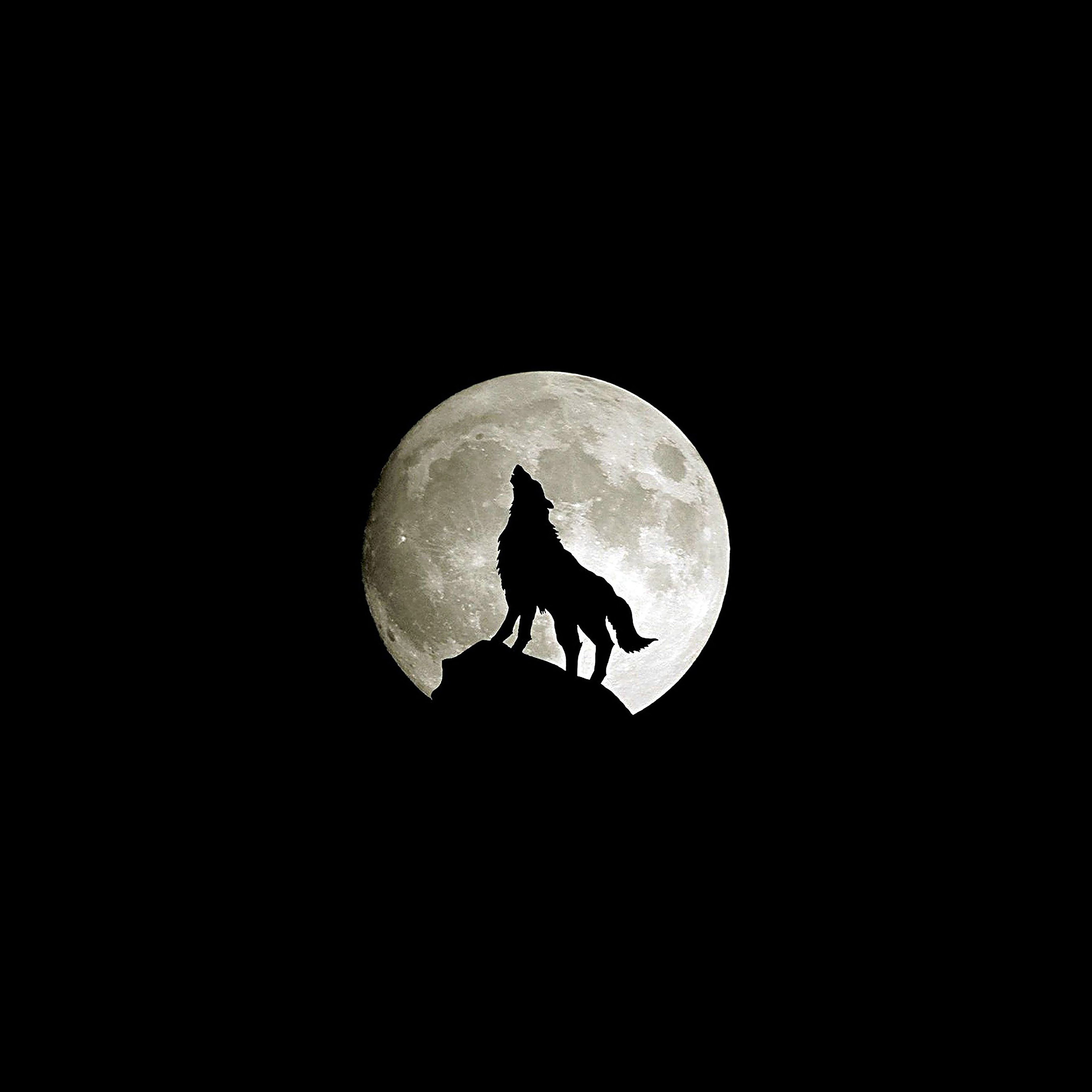 Ma32 Wolf Howl Animal Dark Minimal Nature Papersco