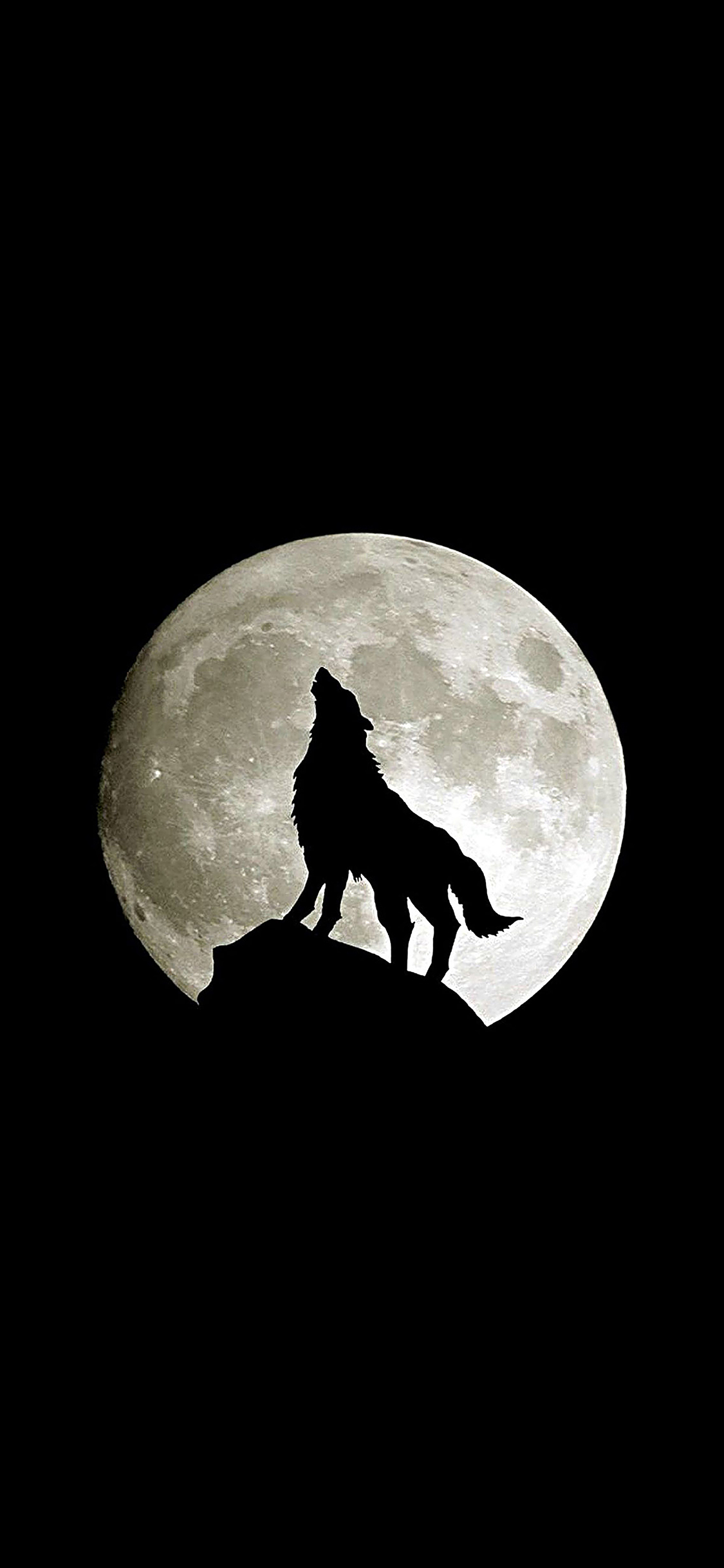 iPhoneXpapers.com-Apple-iPhone-wallpaper-ma32-wolf-howl-animal-dark-minimal-nature