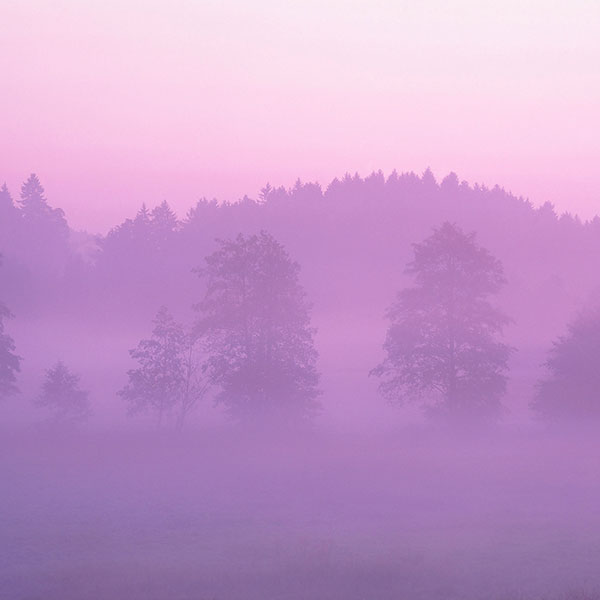 iPapers.co-Apple-iPhone-iPad-Macbook-iMac-wallpaper-ma37-misty-pink-forest-mountain-nature