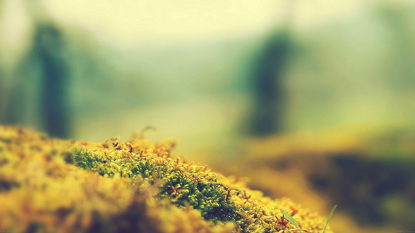 iPapers.co-Apple-iPhone-iPad-Macbook-iMac-wallpaper-ma39-lovely-moss-flower-nature