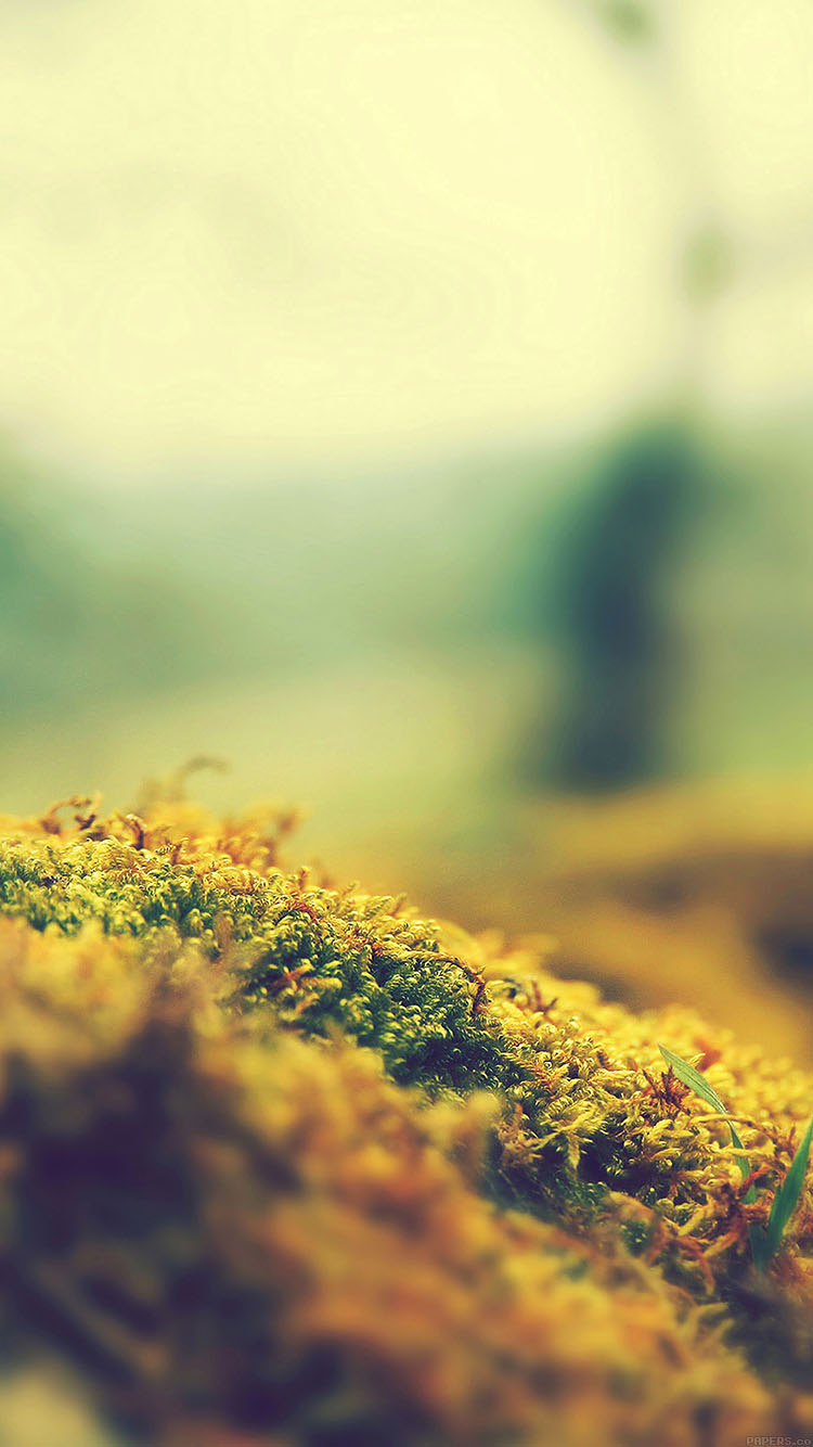 iPhone6papers.co-Apple-iPhone-6-iphone6-plus-wallpaper-ma39-lovely-moss-flower-nature