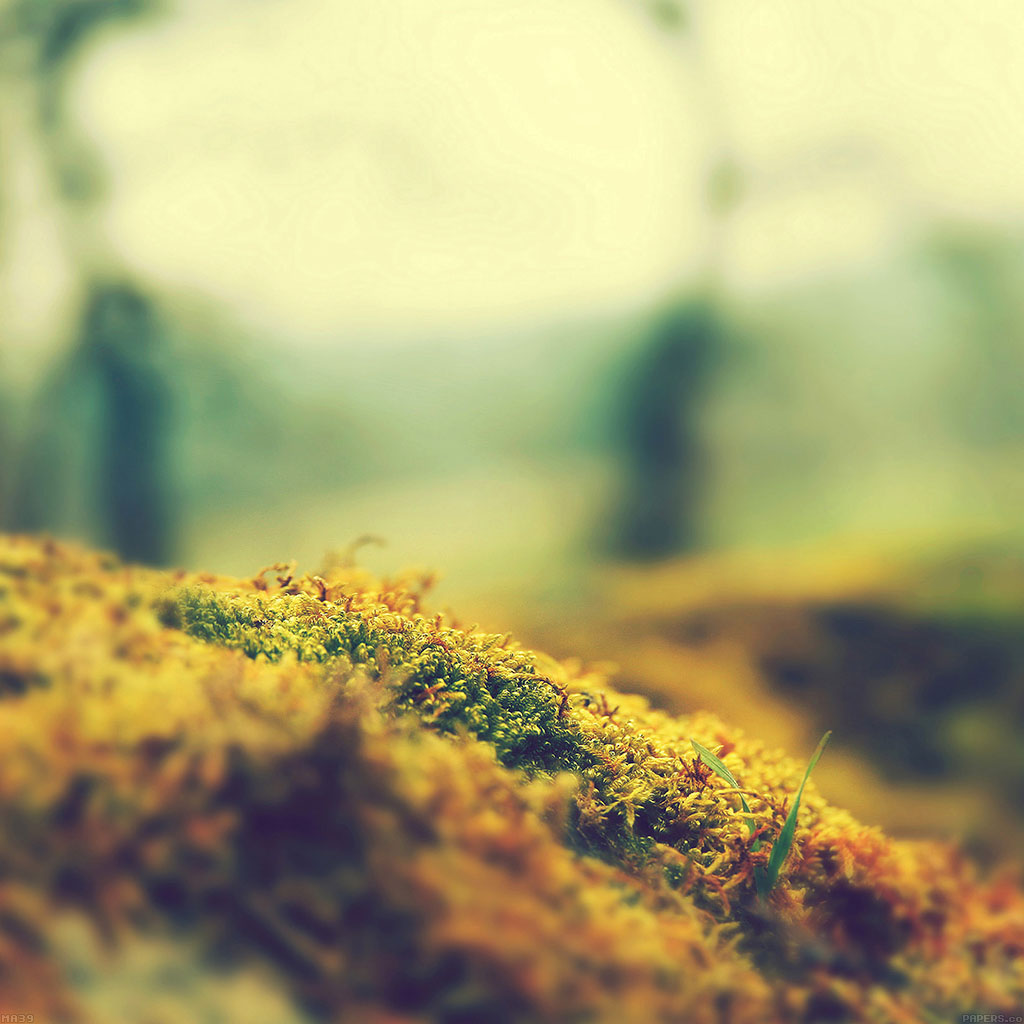 android-wallpaper-ma39-lovely-moss-flower-nature-wallpaper