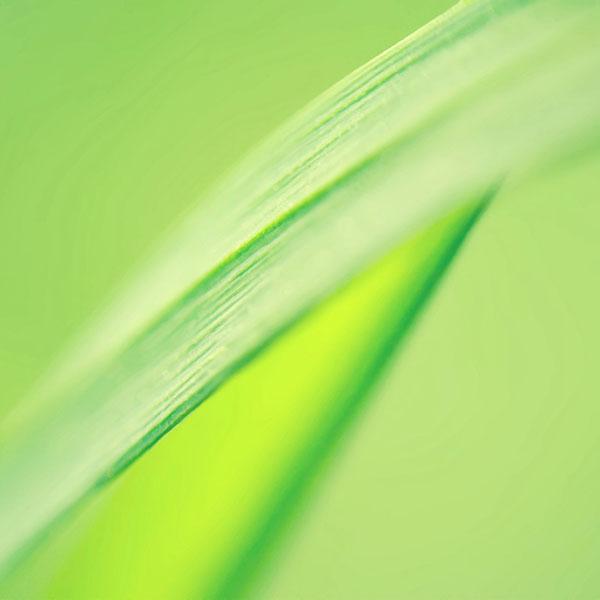 iPapers.co-Apple-iPhone-iPad-Macbook-iMac-wallpaper-ma40-15-ii-leaf-flower-nature