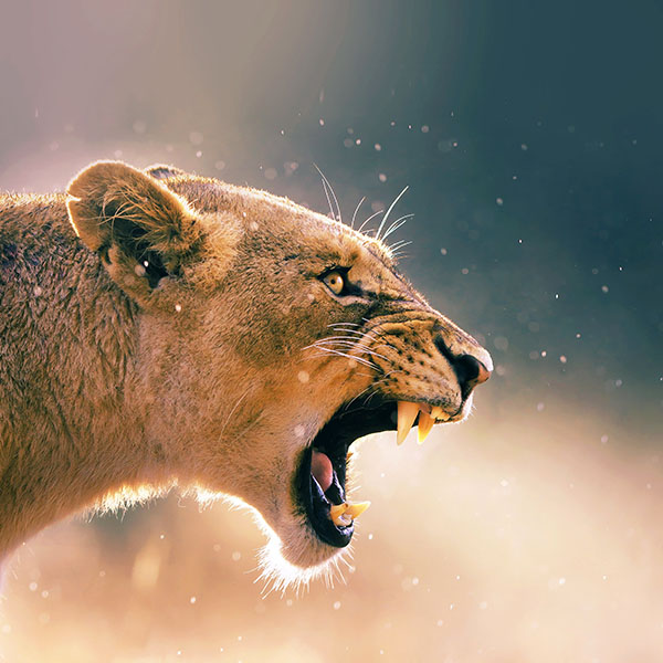 i need a essay on lions 208 words essay for kids on the lion ssatpathy advertisements:  here you can publish your research papers, essays, letters, stories, poetries, biographies, notes, reviews, advises and allied information with a single vision to liberate knowledge.