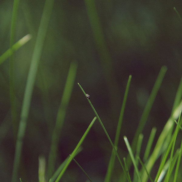 iPapers.co-Apple-iPhone-iPad-Macbook-iMac-wallpaper-ma50-grassy-leaf-flower-nature
