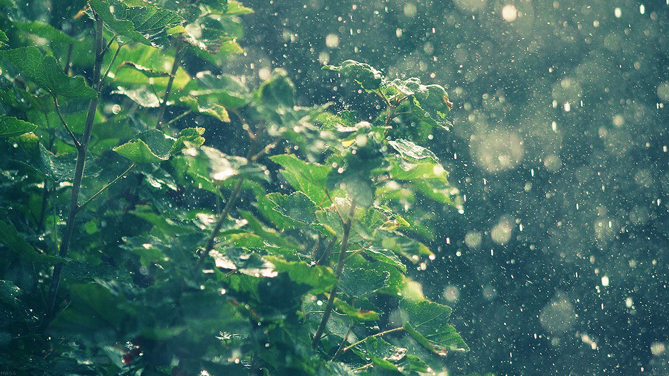 wallpaper-desktop-laptop-mac-macbook-ma56-raining-summer-sunny-flower-nature-wallpaper