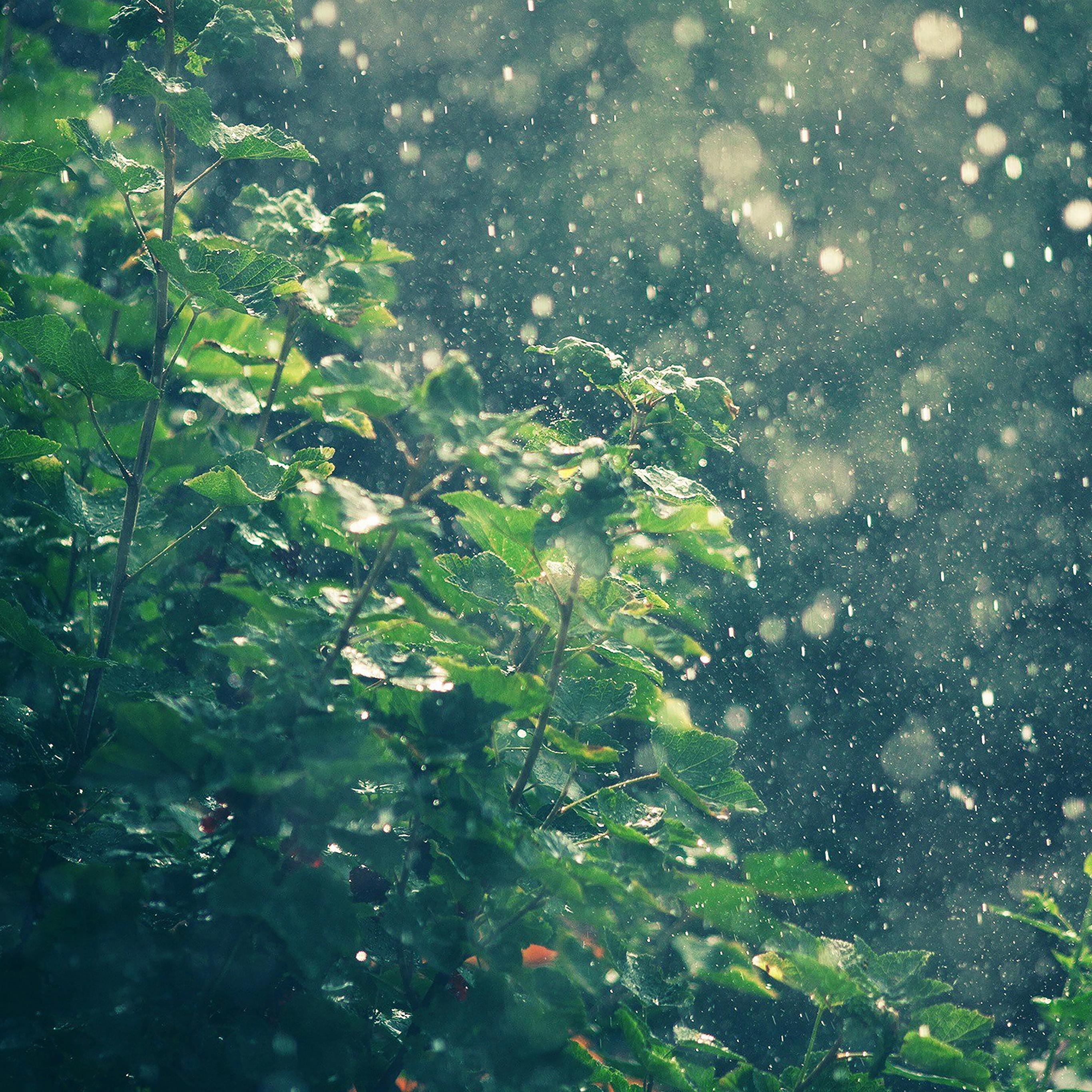 Ma56 raining summer sunny flower nature - Rainy nature hd wallpaper ...