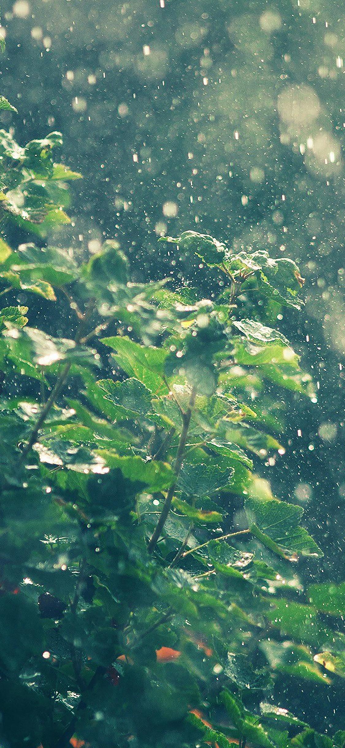 iPhoneXpapers.com-Apple-iPhone-wallpaper-ma56-raining-summer-sunny-flower-nature