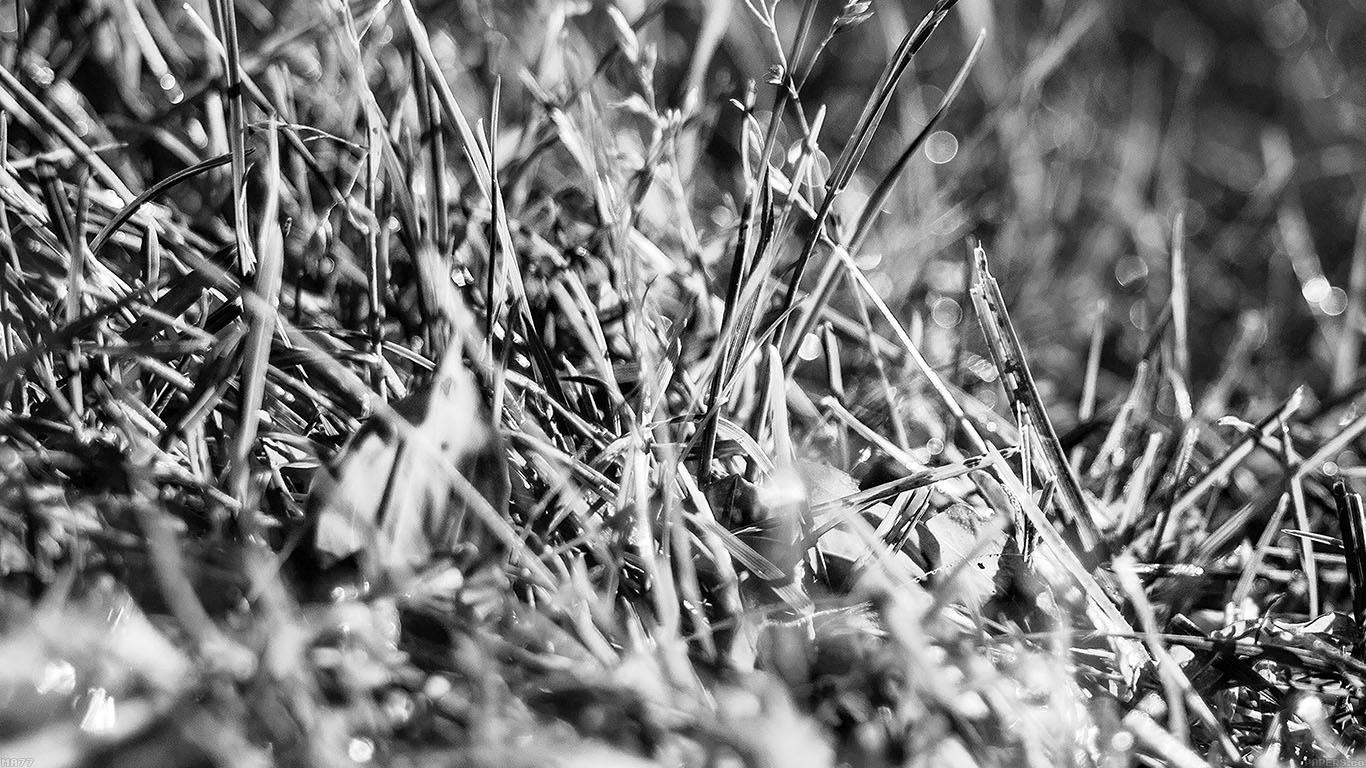 iPapers.co-Apple-iPhone-iPad-Macbook-iMac-wallpaper-ma77-bw-grass-leaf-flower-nature