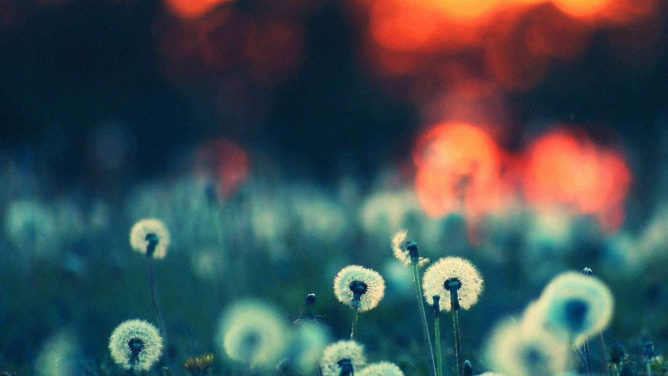 iPapers.co-Apple-iPhone-iPad-Macbook-iMac-wallpaper-ma79-dandelion-family-flower-nature