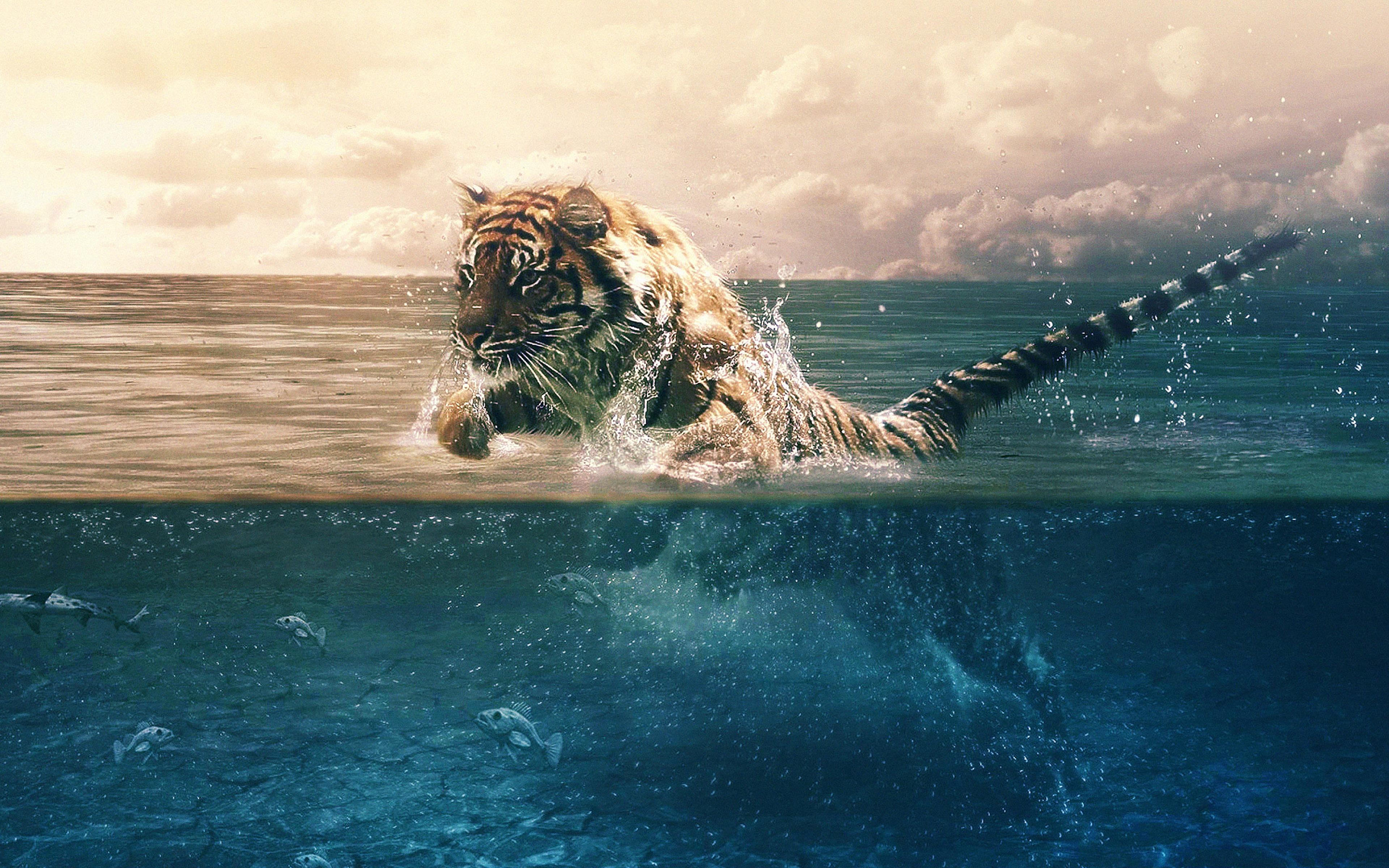 Ma95 tiger running blue sea nature - Nature wallpaper 4k iphone ...