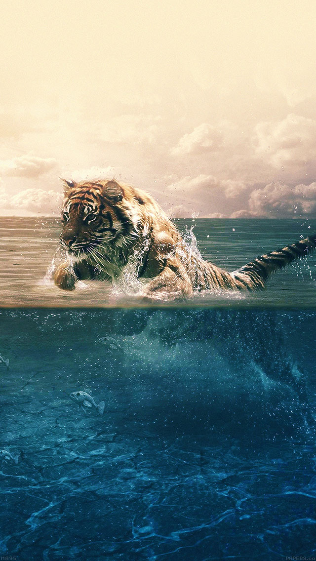 freeios8.com-iphone-4-5-6-ipad-ios8-ma95-tiger-running-blue-sea-nature
