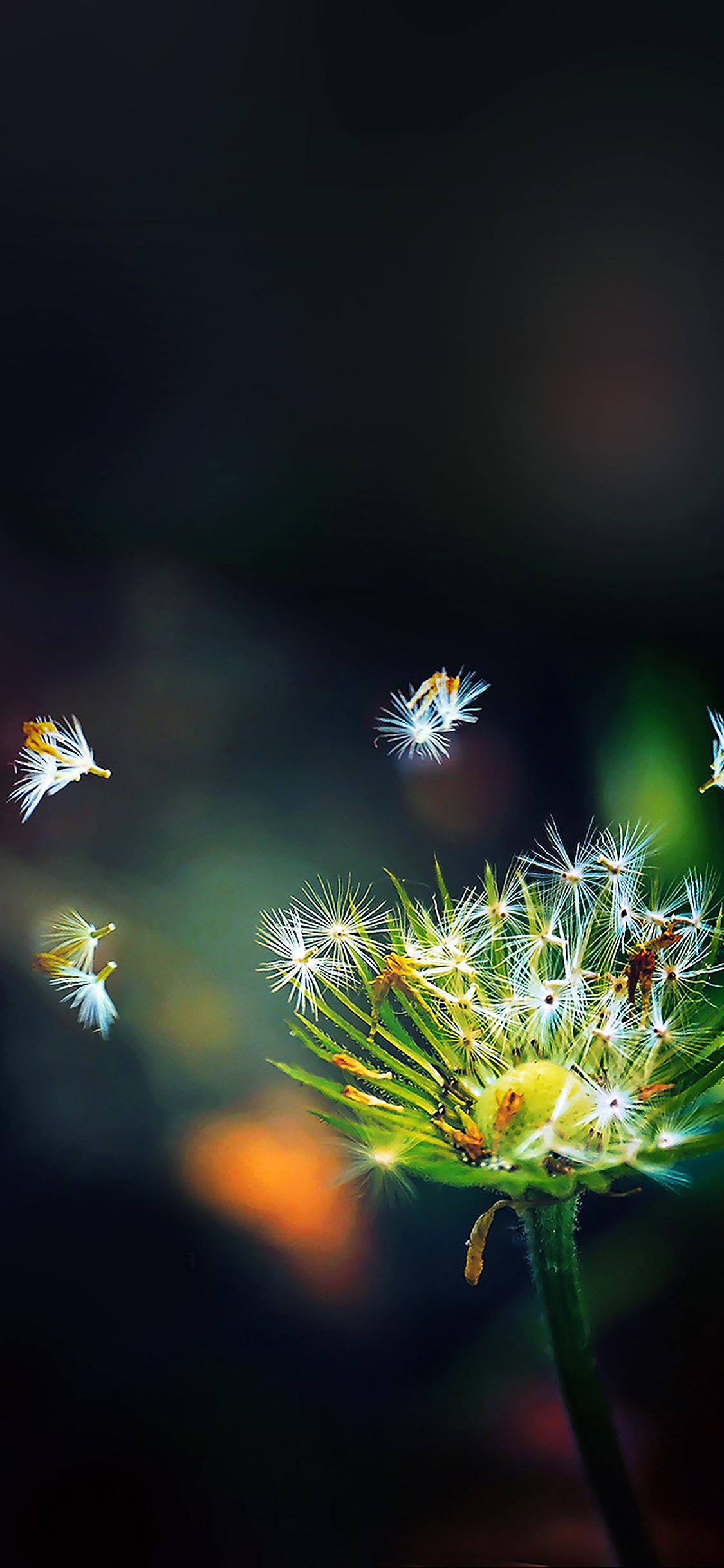 iPhoneXpapers.com-Apple-iPhone-wallpaper-ma99-blow-dandelion-flower-nature