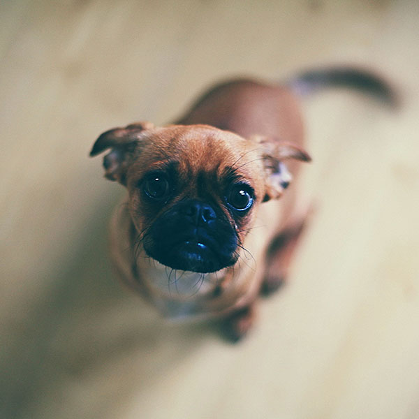 iPapers.co-Apple-iPhone-iPad-Macbook-iMac-wallpaper-mb10-wallpaper-feed-me-animal-dog