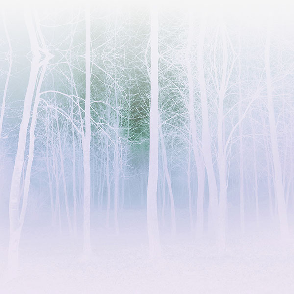 iPapers.co-Apple-iPhone-iPad-Macbook-iMac-wallpaper-mb15-wallpaper-foggy-forest-white