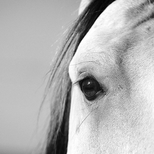 iPapers.co-Apple-iPhone-iPad-Macbook-iMac-wallpaper-mb29-wallpaper-eye-of-peace-b-horse