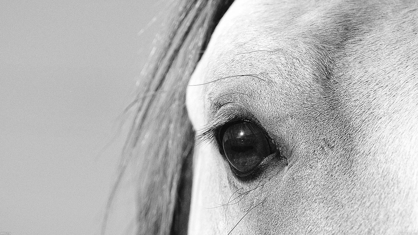 Wallpaper For Desktop Laptop Mb29 Wallpaper Eye Of Peace B Horse