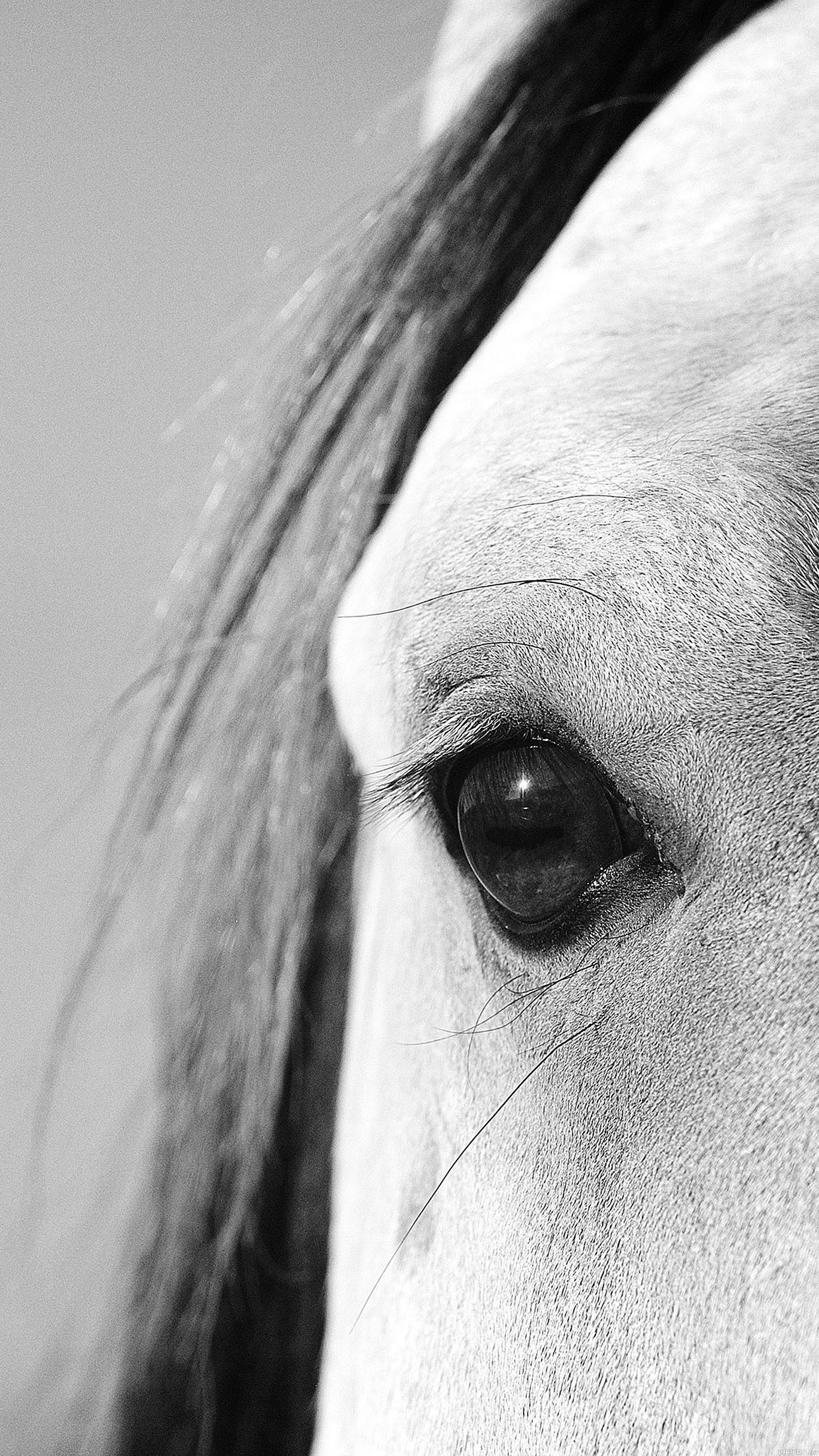 Iphone7papers Mb29 Wallpaper Eye Of Peace B Horse