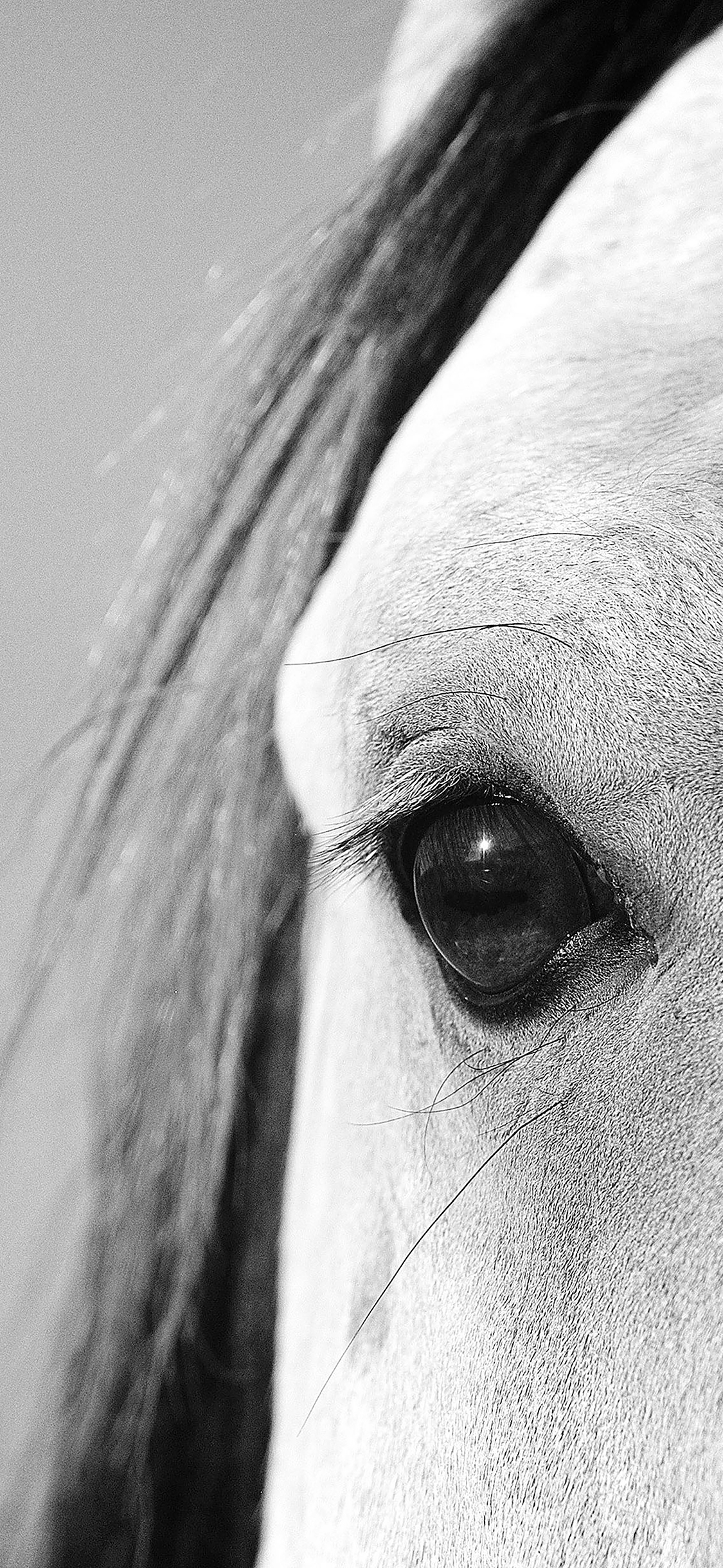 iPhoneXpapers.com-Apple-iPhone-wallpaper-mb29-wallpaper-eye-of-peace-b-horse