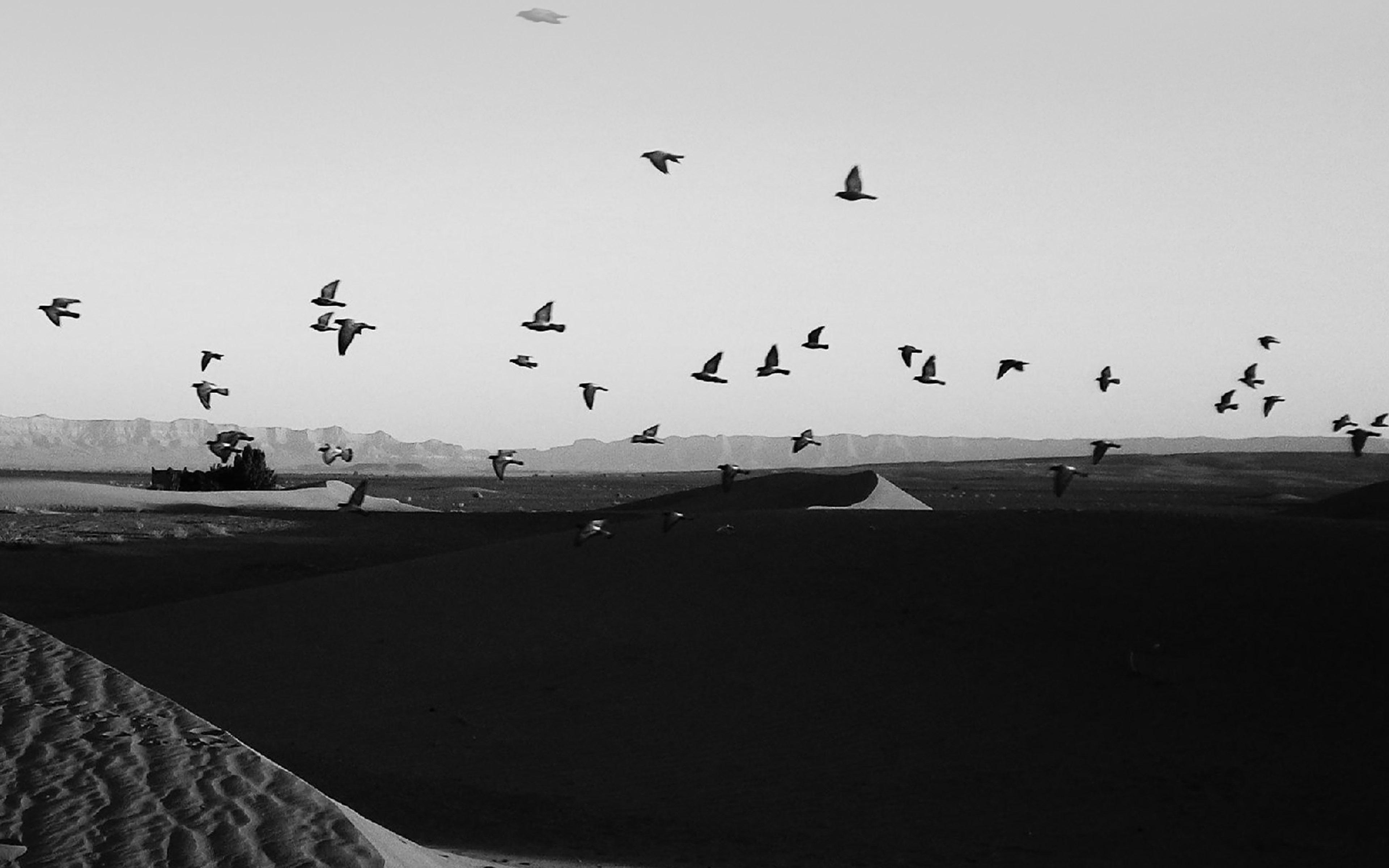 Mb31 Wallpaper Flights Of Birds Desert Papersco
