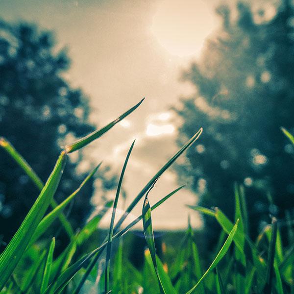 iPapers.co-Apple-iPhone-iPad-Macbook-iMac-wallpaper-mb36-wallpaper-grass-sunshine-leaf-nature