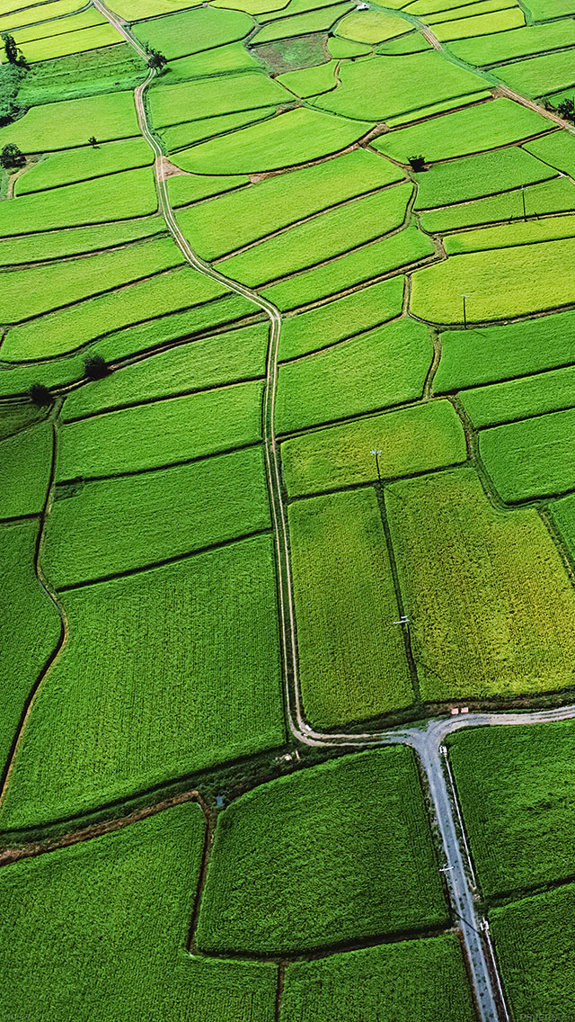 freeios8.com-iphone-4-5-6-ipad-ios8-mb57-wallpaper-rice-paddy-field-nature