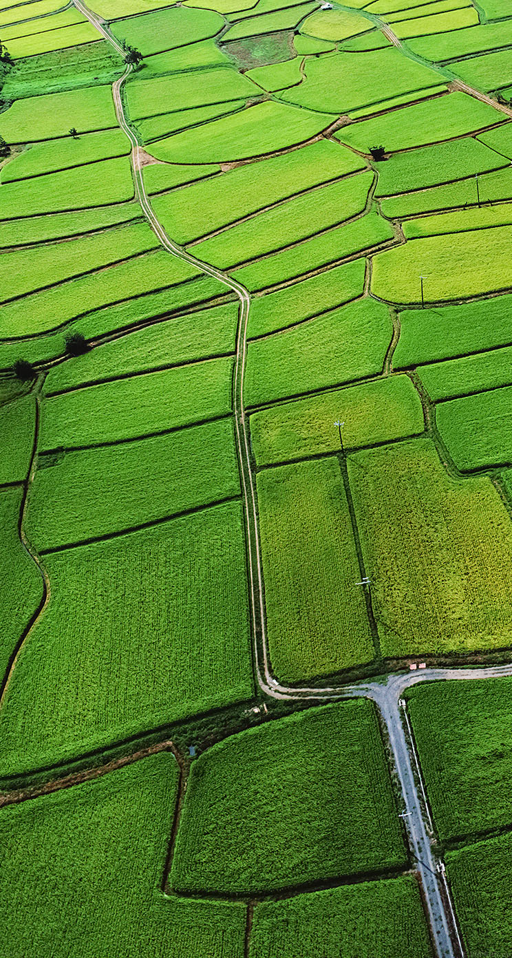Hd wallpaper iphone 7 - Freeios7 Mb57 Wallpaper Rice Paddy Field Nature
