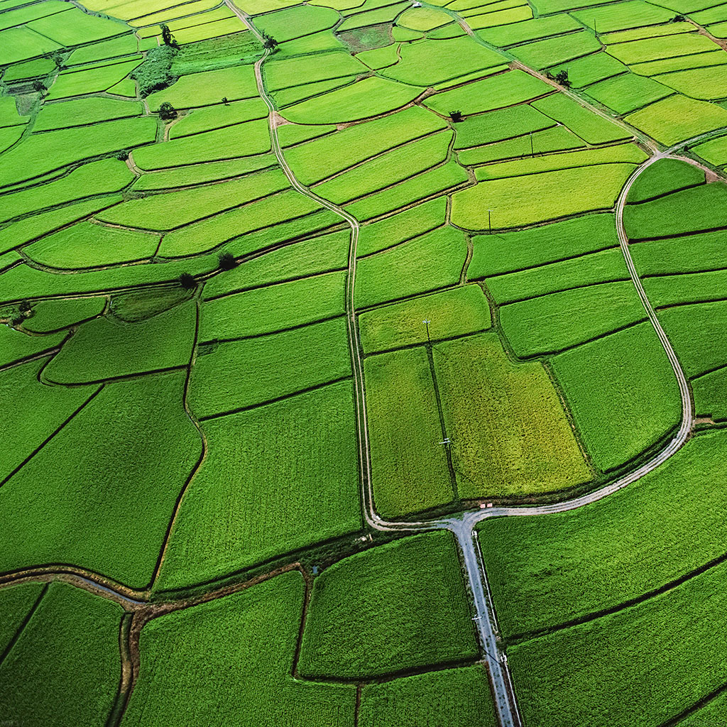android-wallpaper-mb57-wallpaper-rice-paddy-field-nature-wallpaper