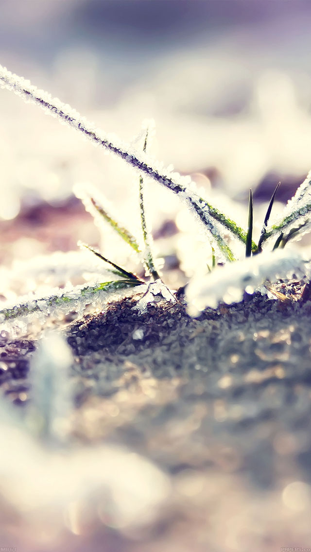 freeios8.com-iphone-4-5-6-ipad-ios8-mb61-wallpaper-bo0xvn-1-II-snow-flower