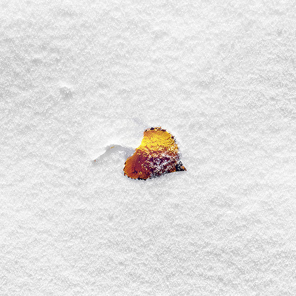 iPapers.co-Apple-iPhone-iPad-Macbook-iMac-wallpaper-mb62-wallpaper-boo-201-snow-leaf