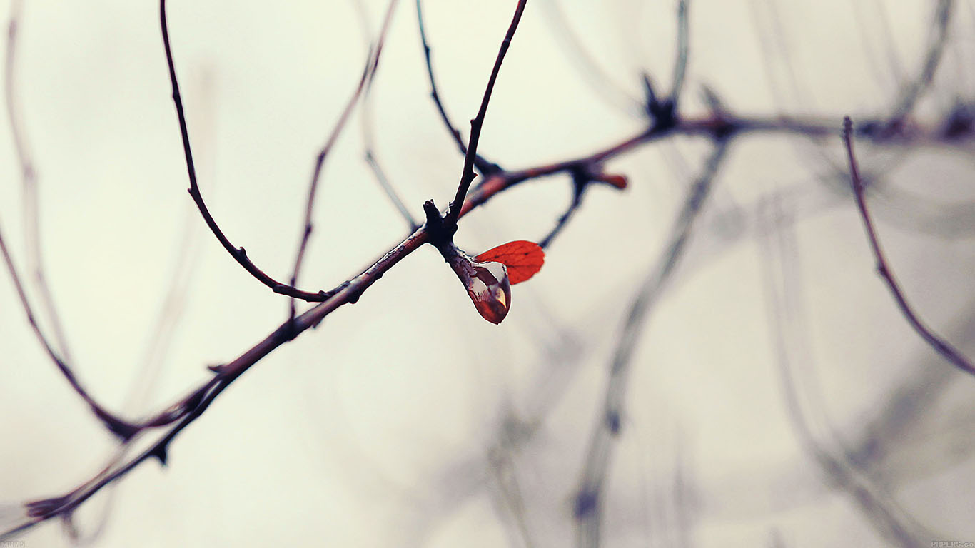 iPapers.co-Apple-iPhone-iPad-Macbook-iMac-wallpaper-mb75-wallpaper-water-winter-tree-flower