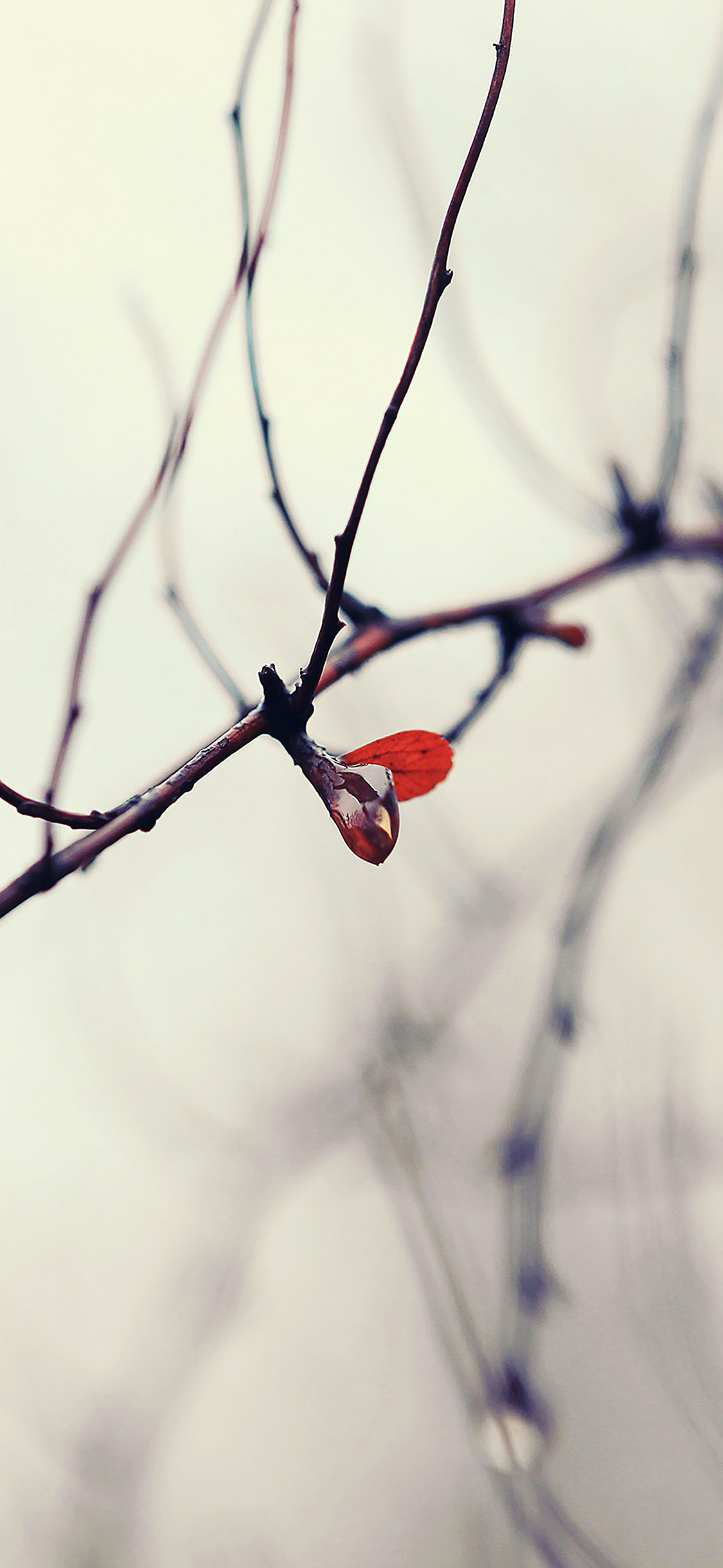 iPhoneXpapers.com-Apple-iPhone-wallpaper-mb75-wallpaper-water-winter-tree-flower