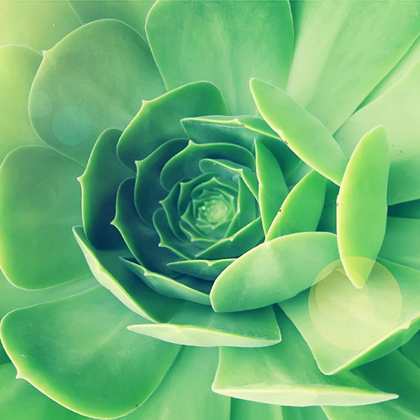 iPapers.co-Apple-iPhone-iPad-Macbook-iMac-wallpaper-mb81-wallpaper-143-i-green-leaf-flower