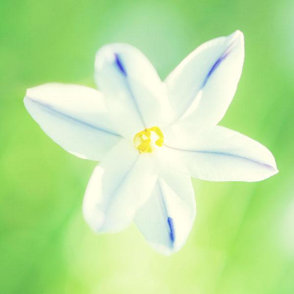 iPapers.co-Apple-iPhone-iPad-Macbook-iMac-wallpaper-mb86-wallpaper-21-ii-cute-flower